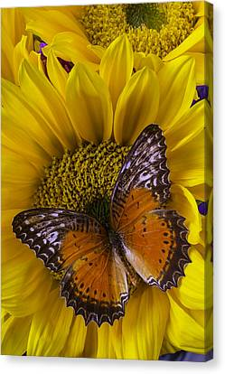 Orange Butterfly On Sunflower Canvas Print by Garry Gay