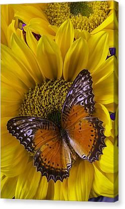 Butterflies Canvas Print - Orange Butterfly On Sunflower by Garry Gay