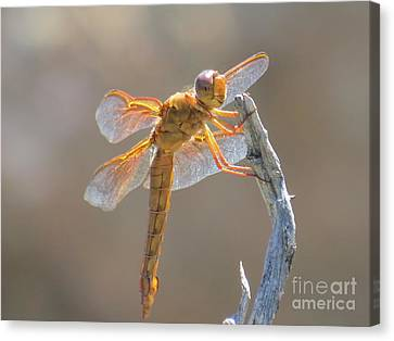 Dragonfly 5 Canvas Print