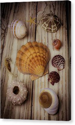 Orange Sea Shell Canvas Print