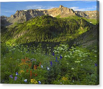 Orange Sneezeweed And Indian Paintbrush Canvas Print by Tim Fitzharris
