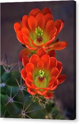 Canvas Print featuring the photograph Orange Ya Beautiful  by Saija Lehtonen