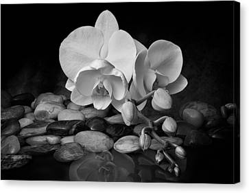 Orchids Canvas Print - Orchid - Sensuous Virtue by Tom Mc Nemar