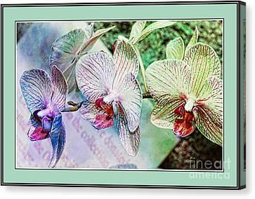 Orchid Trio Canvas Print