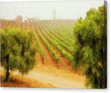 Orcutt Vineyard Canvas Print
