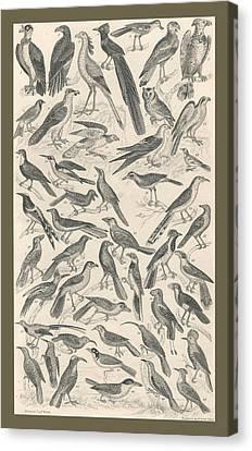 Ornithology Canvas Print by Rob Dreyer