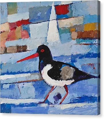 Oystercatcher Canvas Print