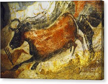 Paleolithic Cave Painting Canvas Print