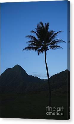 Palm And Blue Sky Canvas Print by Dana Edmunds - Printscapes