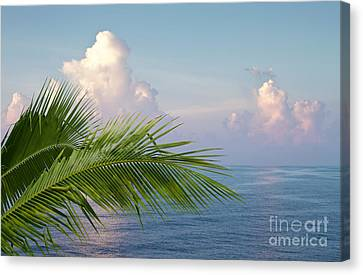 Palm And Ocean Canvas Print