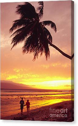 Overhang Canvas Print - Palm Over The Beach by Ron Dahlquist - Printscapes