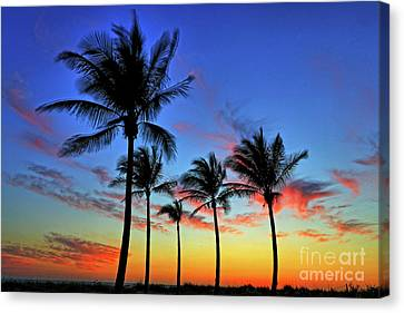 Canvas Print featuring the photograph Palm Tree Skies by Scott Mahon
