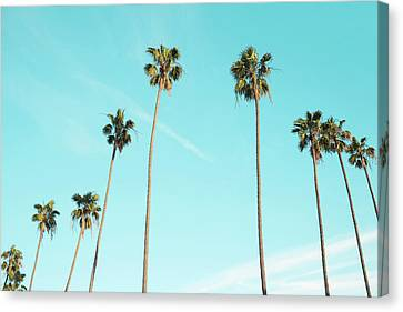 Palm Trees Canvas Print by Happy Home Artistry