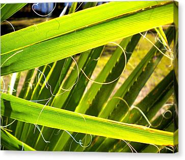 Canvas Print featuring the painting Palmetto 3 by Renate Nadi Wesley