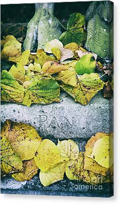 Pan Canvas Print by Tim Gainey