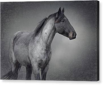 Parker Canvas Print by Debby Herold