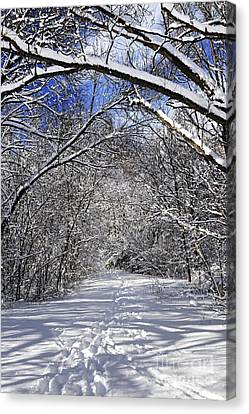 Snow Scene Canvas Print - Path In Winter Forest by Elena Elisseeva