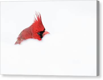 Canvas Print featuring the photograph Peekaboo by Mircea Costina Photography
