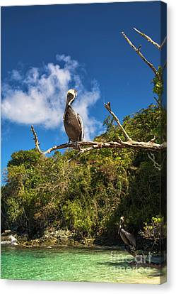 Canvas Print - Pelican In Paradise by Mariola Bitner