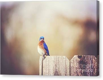 Perched And Pretty Canvas Print