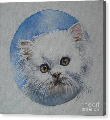Persian Kitten Canvas Print