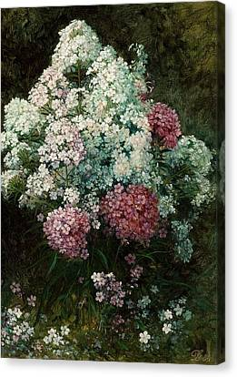 Phlox  Canvas Print by MotionAge Designs