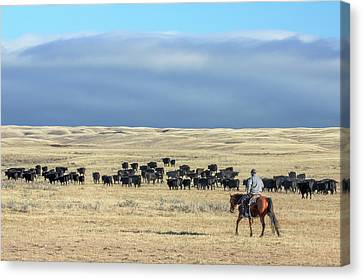 Driving The Herd Canvas Print