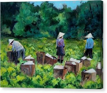 Picking Romaine Canvas Print