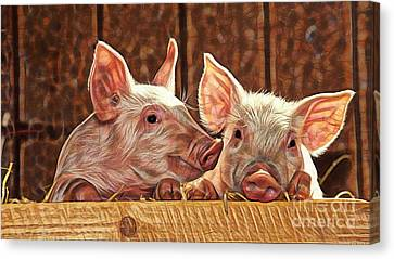 Pig Collection Canvas Print by Marvin Blaine