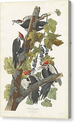 Pileated Woodpecker Canvas Print by John James Audubon