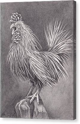 Pine Chicken Canvas Print by Cheri Crawford
