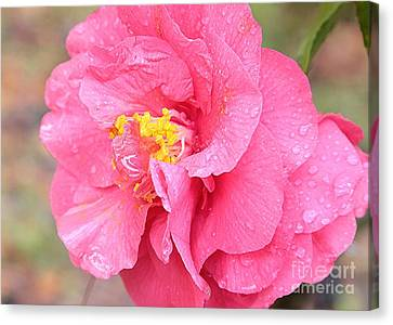 Pink Camellia Closeup Canvas Print by Carol Groenen