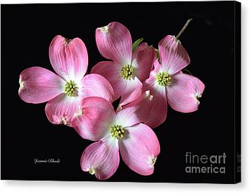 Pink Dogwood Branch Canvas Print by Jeannie Rhode