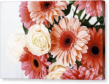 Pink Gerbera Daisy Flowers And White Roses Bouquet Canvas Print by Radu Bercan