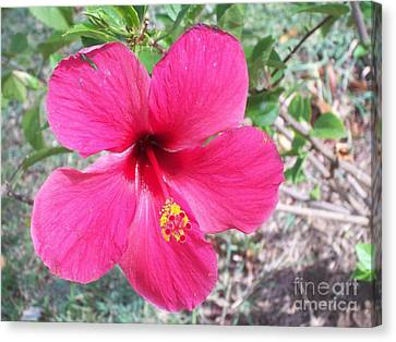 Pink Hibiscus Beauty Canvas Print