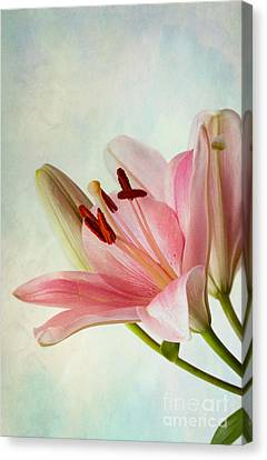 Pink Lilies Canvas Print by Nailia Schwarz