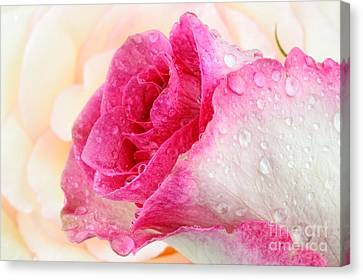 Pink Canvas Print by Mark Johnson