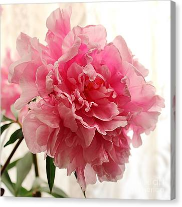 Pink Peony 2 Canvas Print by Katy Mei
