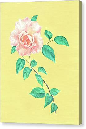 Canvas Print featuring the painting Pink Rose by Elizabeth Lock