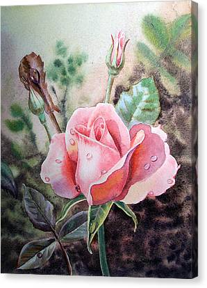 Canvas Print featuring the painting Pink Rose With Dew Drops by Irina Sztukowski