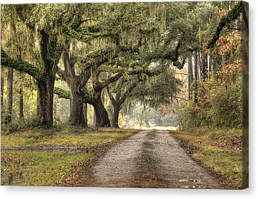 Plantation Drive Live Oaks  Canvas Print by Dustin K Ryan