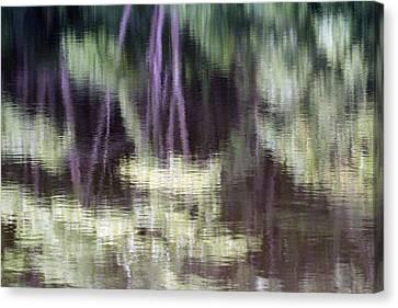 Pond Reflect Canvas Print by Karol Livote