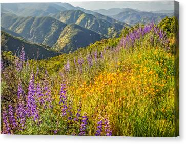 Poppies And Lupine Canvas Print by Marc Crumpler