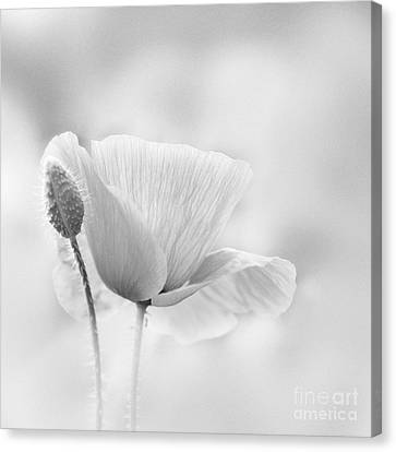Poppy Impression Canvas Print by Janet Burdon