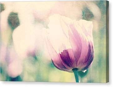 Poppy Still Life Canvas Print