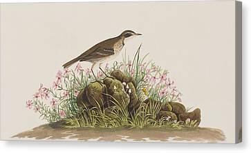 Prairie Titlark Canvas Print by John James Audubon