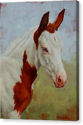 Pretty Baby-paint Foal Portrait Canvas Print by Margaret Stockdale