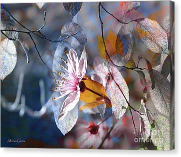 Canvas Print featuring the photograph Primavera by Alfonso Garcia