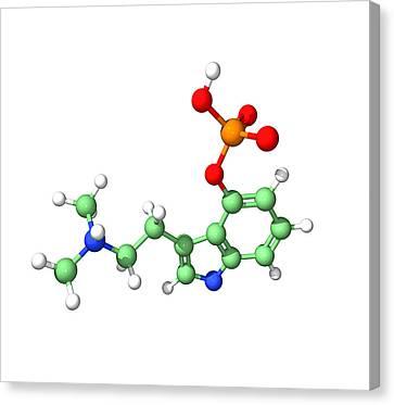 Psilocybin Hallucinogen Molecule Canvas Print by Dr Tim Evans