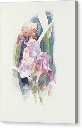 Purple Flowers Canvas Print - Purple Iris by Charles Demuth